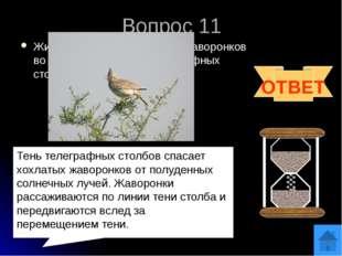 Источники http://www.proshkolu.ru/user/sergeywaz/file/273215/ http://chgk.tvi