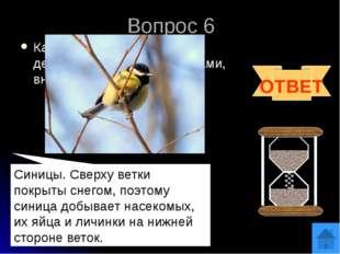 Вопрос 8 Если в названии этой птицы убрать одну букву, то получится название