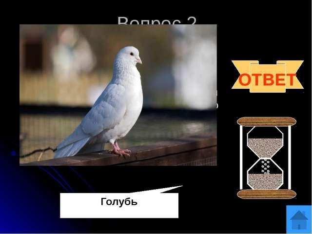 Вопрос 3 ОТВЕТ Горихвостка. Хвост у этой небольшой буровато-серой птички огне...