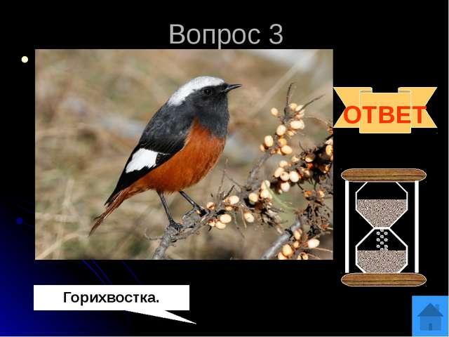 Вопрос 4 Эта очень подвижная птичка, даже отдыхая, ежеминутно помахивает свои...