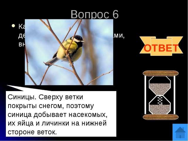 Вопрос 8 Если в названии этой птицы убрать одну букву, то получится название...