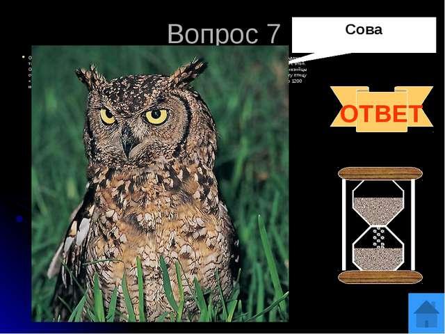 Вопрос 9 У какой птицы хвост имеет форму музыкального инструмента? ОТВЕТ Лиро...