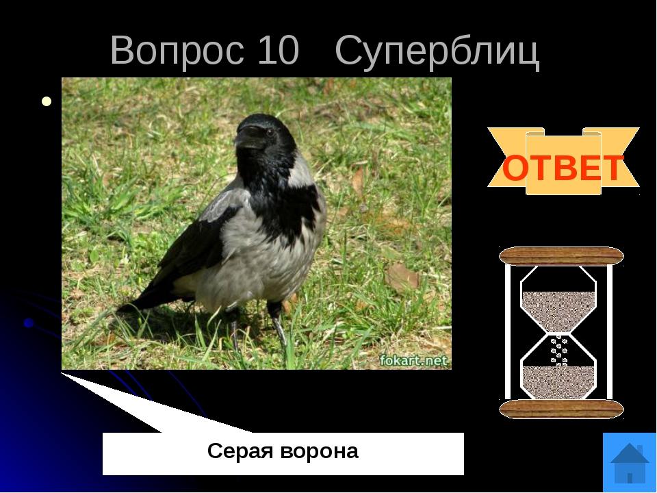Вопрос 12 «Черный ящик» В «Загадочном ящике» находится аналог застежки – «мол...