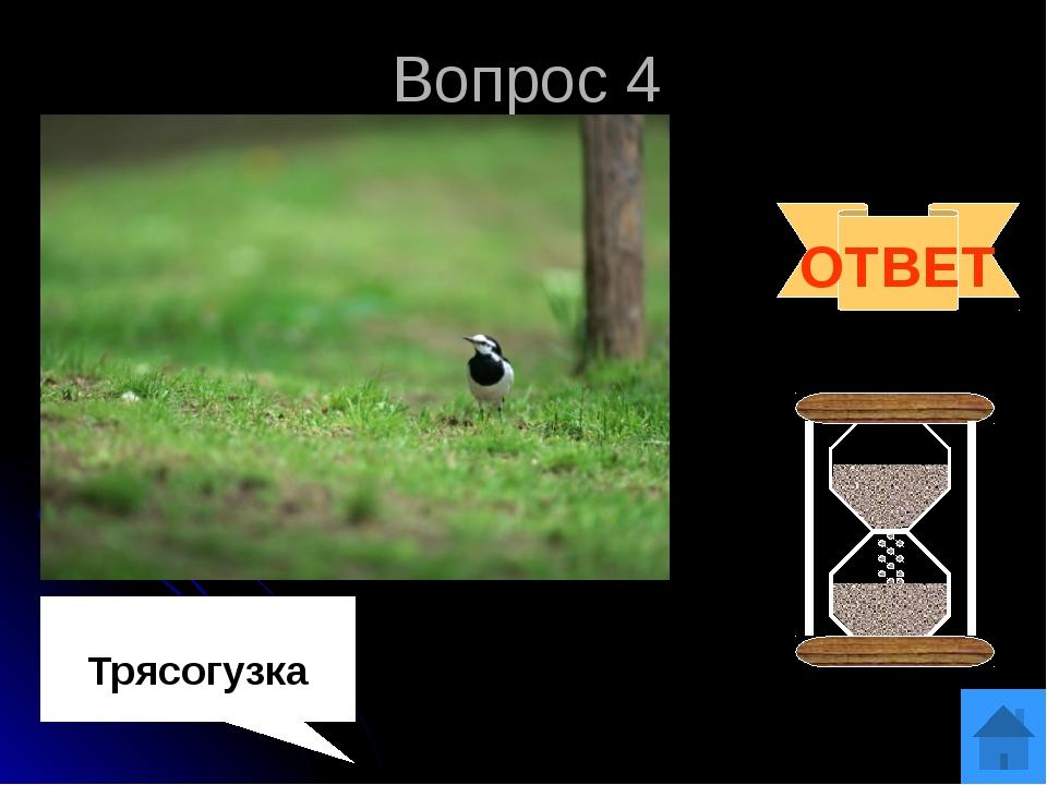 Вопрос 5 Блиц Кого считают предком современных птиц? Какая птица клювом может...