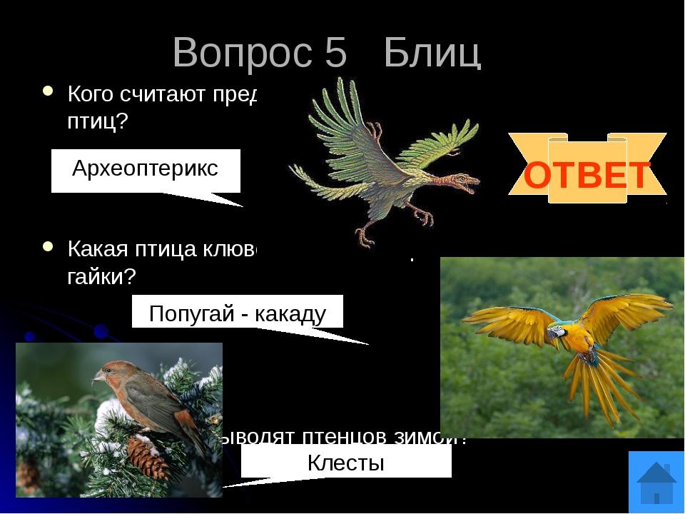 Вопрос 6 Какие птицы повисают на деревьях зимой кверху ногами, вниз спиной? З...