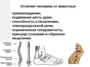 прямохождение; подвижная кисть руки; способность к мышлению, членораздельной