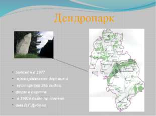 Дендропарк заложен в 1977 произрастают деревья и кустарники 265 видов, форм