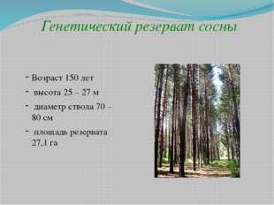 Генетический резерват сосны Возраст 150 лет высота 25 – 27 м диаметр ствола 7