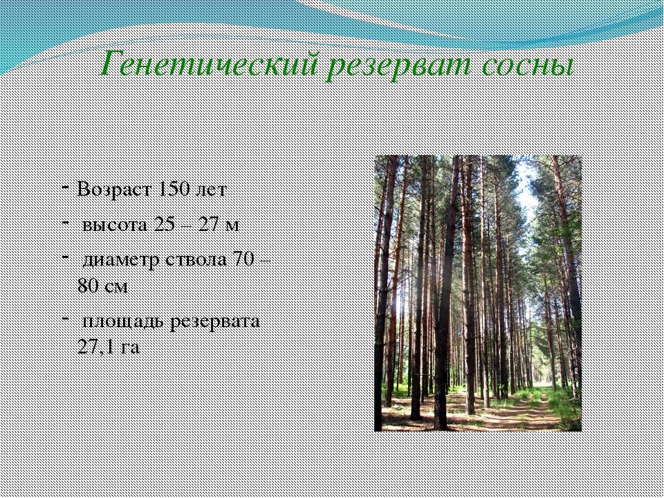 Генетический резерват сосны Возраст 150 лет высота 25 – 27 м диаметр ствола 7...