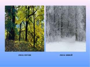леса летом леса зимой