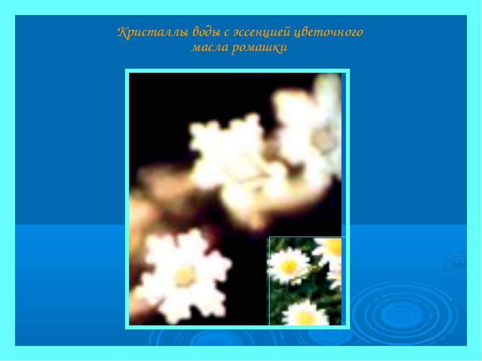 Кристаллы воды с эссенцией цветочного масла ромашки