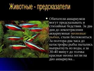 Обитатели аквариумов могут предсказывать и стихийные бедствия. За два дня до