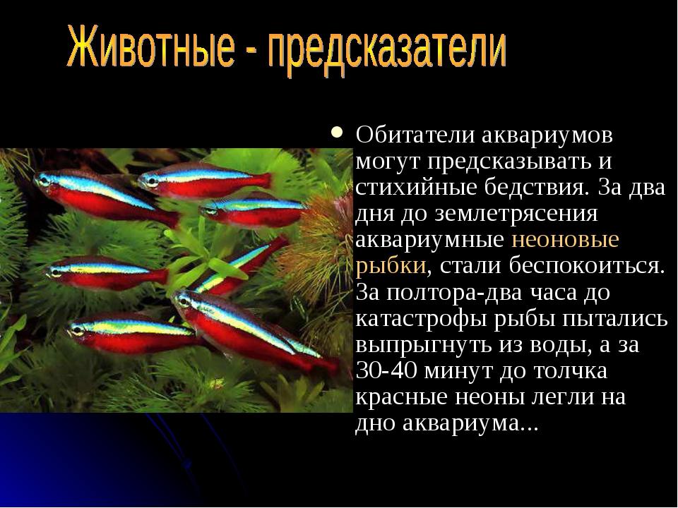 Обитатели аквариумов могут предсказывать и стихийные бедствия. За два дня до...