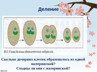Деление Сколько дочерних клеток образовалось из одной материнской? Сходны ли