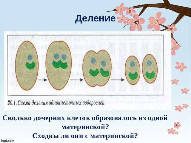Деление Сколько дочерних клеток образовалось из одной материнской? Сходны ли...
