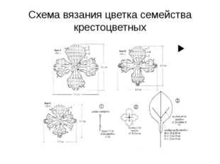 Схема вязания цветка семейства крестоцветных