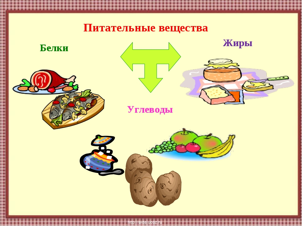 Питательные вещества Белки Жиры Углеводы
