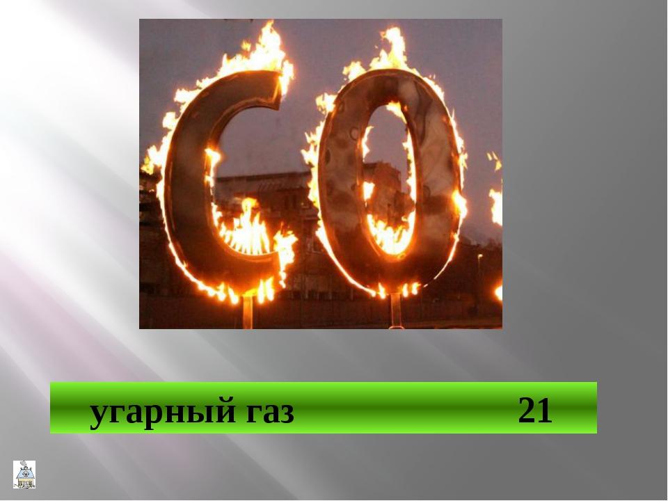 Крыса 31