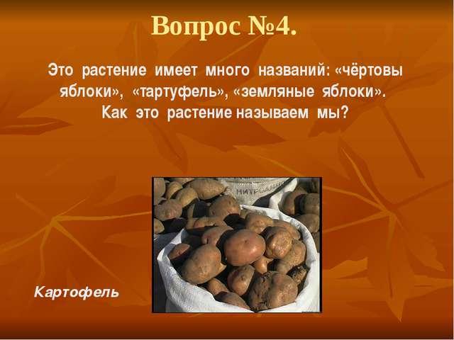 Вопрос №4. Это растение имеет много названий: «чёртовы яблоки», «тартуфель»,...