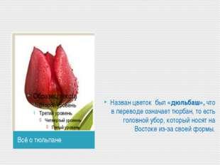 Всё о тюльпане Назван цветок был «дюльбаш», что в переводе означает тюрбан,