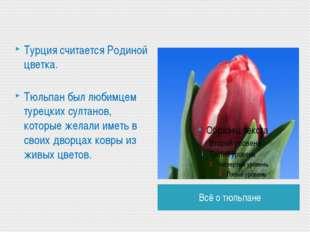 Всё о тюльпане Турция считается Родиной цветка. Тюльпан был любимцем турецких