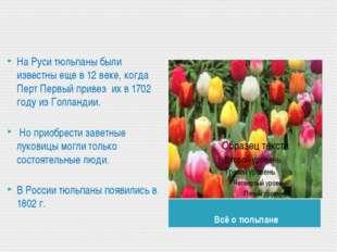 Всё о тюльпане На Руси тюльпаны были известны еще в 12 веке, когда Перт Перв