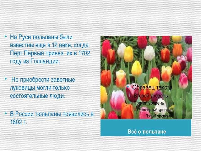 Всё о тюльпане На Руси тюльпаны были известны еще в 12 веке, когда Перт Перв...