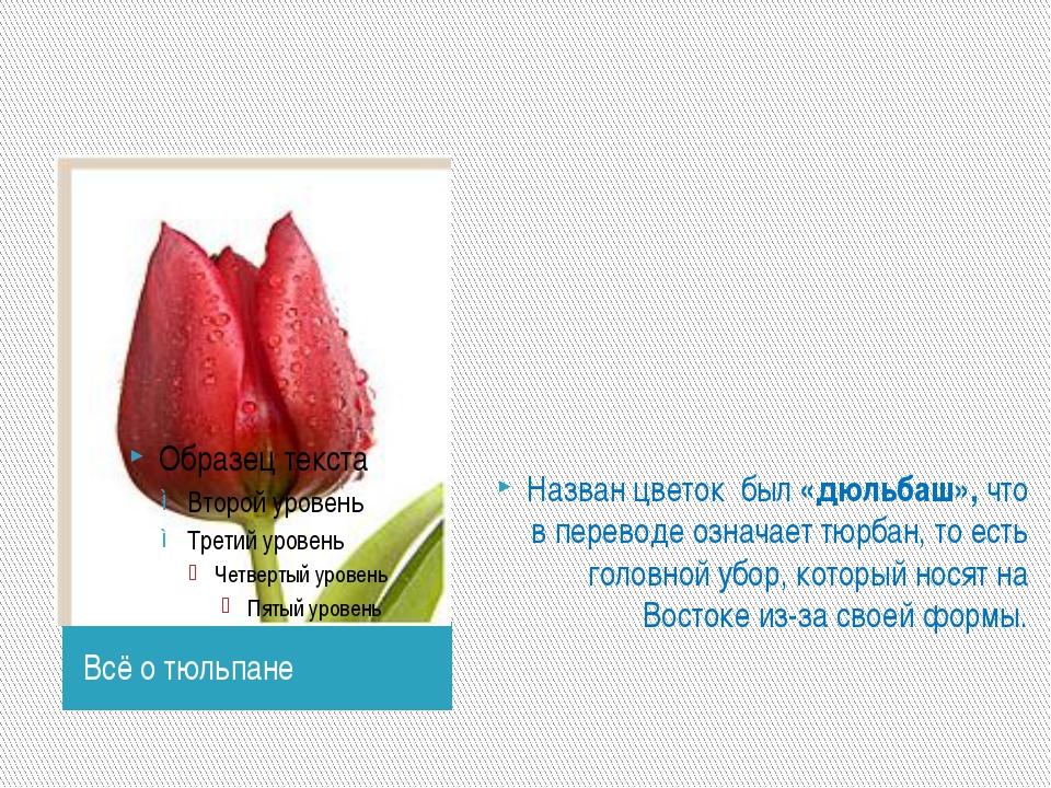 Всё о тюльпане Назван цветок был «дюльбаш», что в переводе означает тюрбан,...