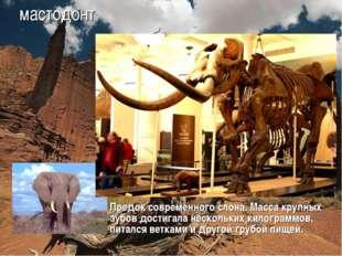 мастодонт Предок современного слона. Масса крупных зубов достигала нескольких