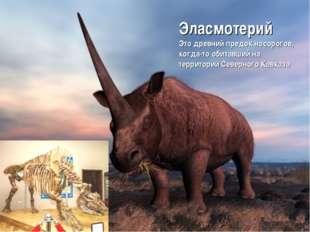 Эласмотерий Это древний предок носорогов, когда-то обитавший на территории Се