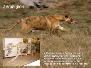 На Древнем Кавказе были и хищники. Самый крупный из них – амфицион, животное