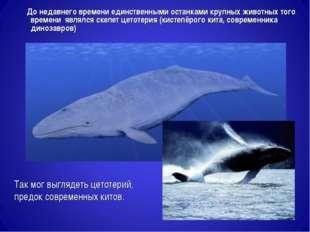 Так мог выглядеть цетотерий, предок современных китов. До недавнего времени е