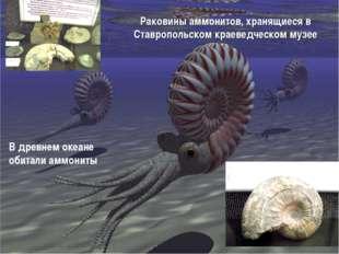 Раковины аммонитов, хранящиеся в Ставропольском краеведческом музее В древнем
