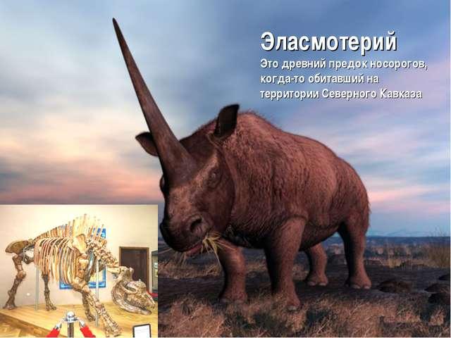 Эласмотерий Это древний предок носорогов, когда-то обитавший на территории Се...