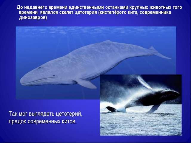 Так мог выглядеть цетотерий, предок современных китов. До недавнего времени е...