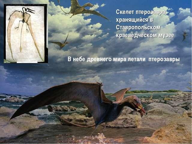 Скелет птерозавра, хранящийся в Ставропольском краеведческом музее В небе дре...
