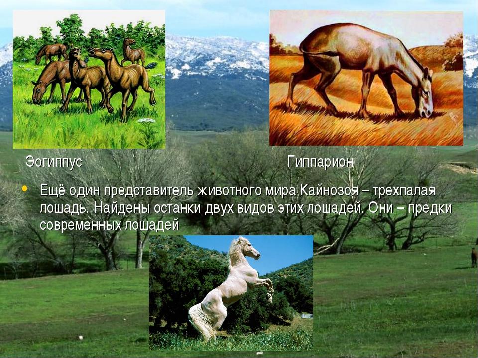 Эогиппус Гиппарион Ещё один представитель животного мира Кайнозоя – трехпалая...