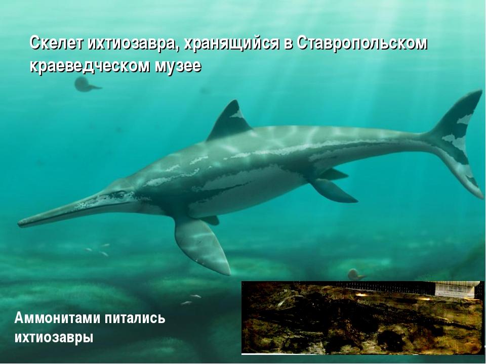 Скелет ихтиозавра, хранящийся в Ставропольском краеведческом музее Аммонитами...
