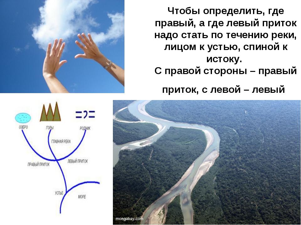 Чтобы определить, где правый, а где левый приток надо стать по течению реки,...