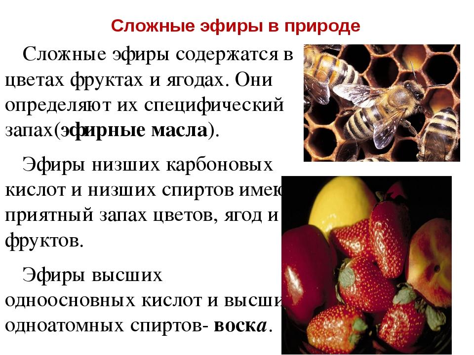 Сложные эфиры в природе Сложные эфиры содержатся в цветах фруктах и ягодах. О...