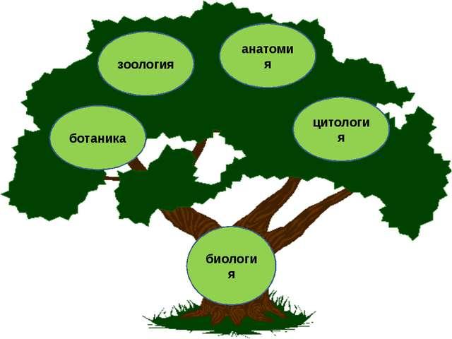 биология ботаника зоология анатомия цитология