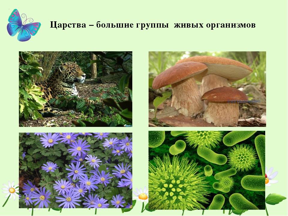 Царства – большие группы живых организмов