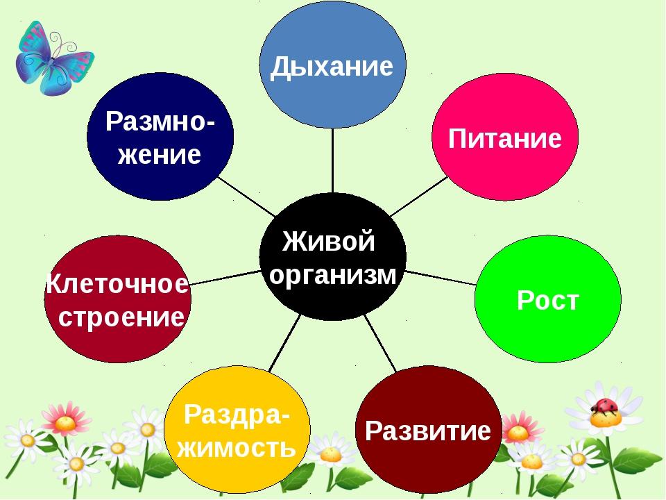 Размно- жение Клеточное строение Раздра- жимость Развитие Рост Питание Дыхан...