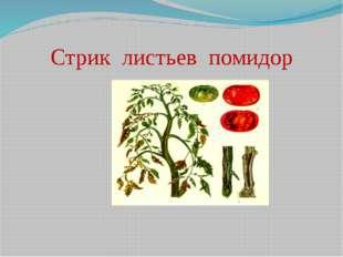 Стрик листьев помидор