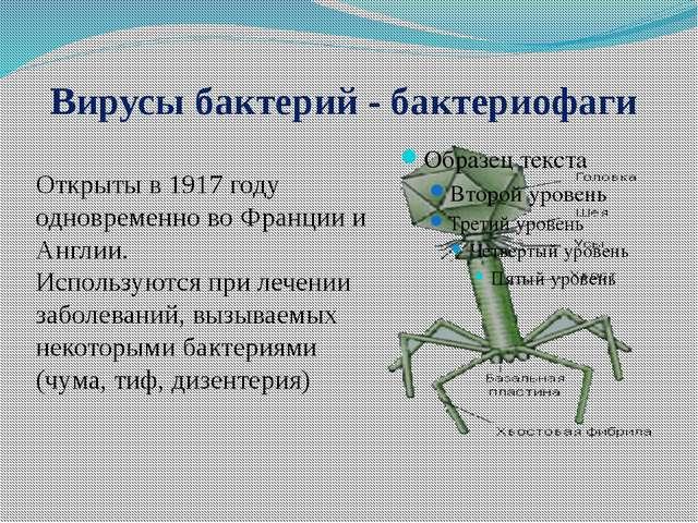 Вирусы бактерий - бактериофаги Открыты в 1917 году одновременно во Франции и...