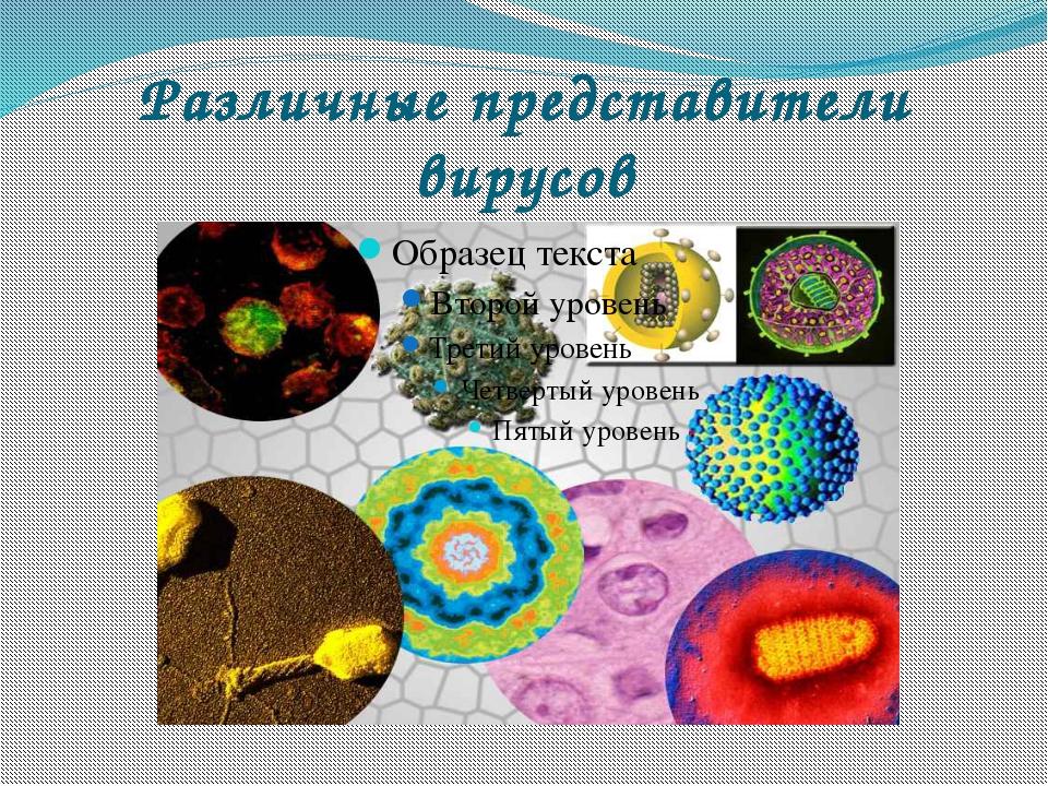 Различные представители вирусов