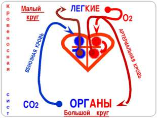ЛЕГКИЕ ОРГАНЫ Кровеносная система О2 СО2 ВЕНОЗНАЯ КРОВЬ АРТЕРИАЛЬНАЯ КРОВЬ Ма