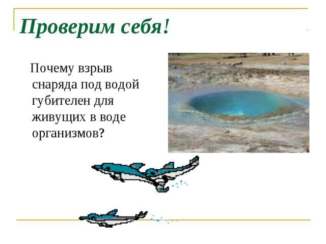 Проверим себя! Почему взрыв снаряда под водой губителен для живущих в воде ор...