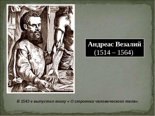 Андреас Везалий (1514 – 1564) В 1543 г выпустил книгу « О строении человеческ...