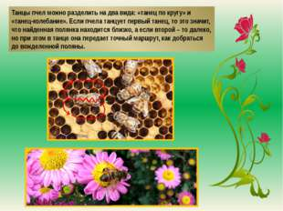 Танцы пчел можно разделить на два вида: «танец по кругу» и «танец-колебание».